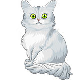 Cute blue Tiffany cat sitting Royalty Free Stock Photography