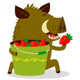 Cute boars or warthog character with bucket of strawberries. Vec. Tor illustration with wild pig. Forest inhabitant in cartoon flat style. Chinese horoscope vector illustration