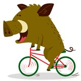 Cute boars or warthog character riding a bicycle. Vector illustr. Ation with pig driving bike. Forest inhabitant in cartoon flat style. Chinese horoscope royalty free illustration