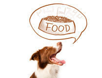 Cute border collie dreaming about food Royalty Free Stock Images