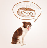 Cute border collie dreaming about food Stock Photography
