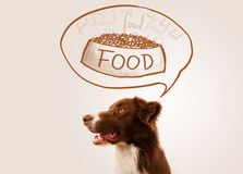 Cute border collie dreaming about food Royalty Free Stock Photography