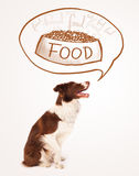 Cute border collie dreaming about food Stock Images