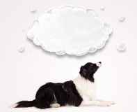 Cute border collie with empty cloud Royalty Free Stock Photos