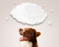 Cute border collie with empty cloud Royalty Free Stock Image