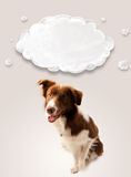 Cute border collie with empty cloud Stock Image