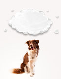Cute border collie with empty cloud Stock Photos