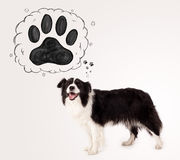 Cute border collie with paw above her head Stock Image