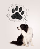 Cute border collie with paw above her head Stock Photos