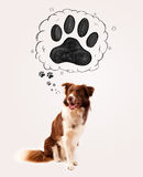 Cute border collie with paw above her head Stock Images