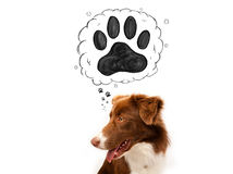 Cute border collie with paw above her head Royalty Free Stock Photo
