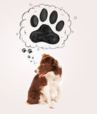 Cute border collie with paw above her head Royalty Free Stock Photos