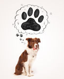 Cute border collie with paw above her head Stock Photography
