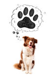 Cute border collie with paw above her head Royalty Free Stock Image