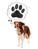 Cute border collie with paw above her head Royalty Free Stock Images
