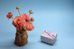 Cute bouquet of tender pink buttercups and a gift on a blue background royalty free stock photo