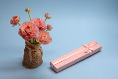 Cute bouquet of tender pink buttercups and a gift on a blue background stock photography