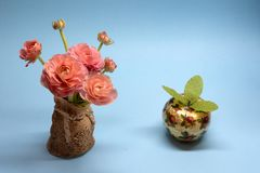 Cute bouquet of tender pink buttercups and a gift on a blue background stock photos