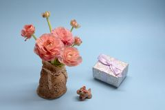 Cute bouquet of tender pink buttercups and a gift on a blue background royalty free stock image