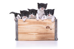Cute Box of Kittens Up for Adoption Stock Image