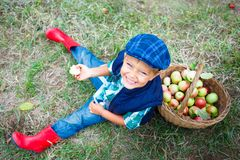 Cute boy in apple orchard Royalty Free Stock Photography