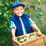 Cute boy in apple orchard Royalty Free Stock Photos
