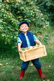 Cute boy in apple orchard Stock Image