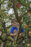 Child climbing apple tree Stock Photography