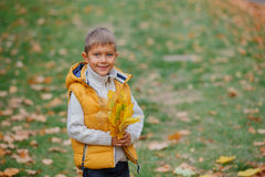 Cute boy with autumn leaves Stock Images