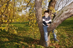 Cute boy on autumn tree Royalty Free Stock Images