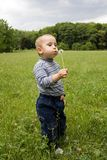 Cute boy blowing on dandelion in summer ti Royalty Free Stock Photo