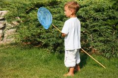 Cute boy with butterfly net Royalty Free Stock Photo