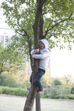 Cute boy climbing the tree Royalty Free Stock Image