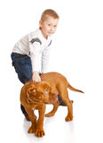 A cute boy with the dog Stock Photo