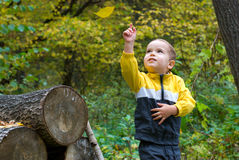 Cute boy and falling leaf. In a forest Stock Photos