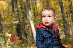 Cute boy and falling leaves. In a forest royalty free stock images