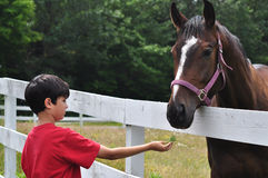 Cute Boy Feeding Horse Stock Photo