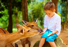 Cute boy feeding young deers from hands. focus on deer Royalty Free Stock Photos