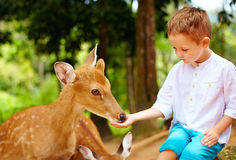 Cute boy feeding young deers from hands Royalty Free Stock Image