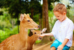 Cute boy feeding young deers from hands Stock Photos