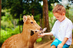 Cute boy feeding young deers from hands Royalty Free Stock Photos
