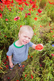 Cute boy in field with red poppies Royalty Free Stock Photos