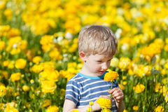 Cute boy at the flower field Stock Image
