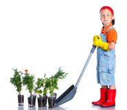 Cute boy gardener. Planting seeds and seedlings of tomatoes and vegetable. on the white background royalty free stock image