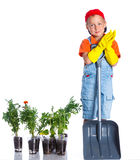 Cute boy gardener. Planting seeds and seedlings of tomatoes and vegetable. on the white background royalty free stock photos