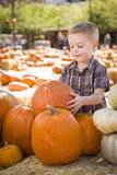 Cute Boy Gathering His Pumpkins at a Pumpkin Patch Stock Images