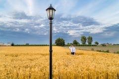 Cute boy in a golden wheat field stock photo