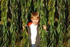 Cute boy in green foliage Stock Photo