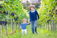 Cute boy and his baby sister in autumn vine yard Stock Photos