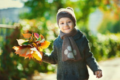 Cute boy holding autumn leaf in the park Stock Image